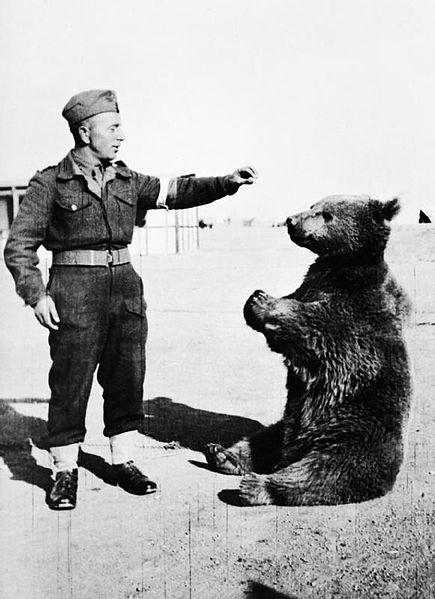 Wojtek the bear with a Polish soldier